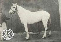 CAXIAS I Foto tirada em 1908 em Belo Horizonte quando foi consagrado Campeão da Raça já em mãos do Cel. Christiano dos Reis Meirelles. No Angahy deixou ótima descendência.