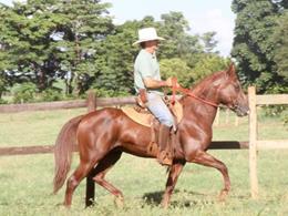 Astor da Selva Morena